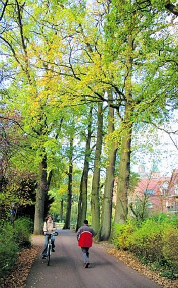 Baumschutzsatzung.jpg